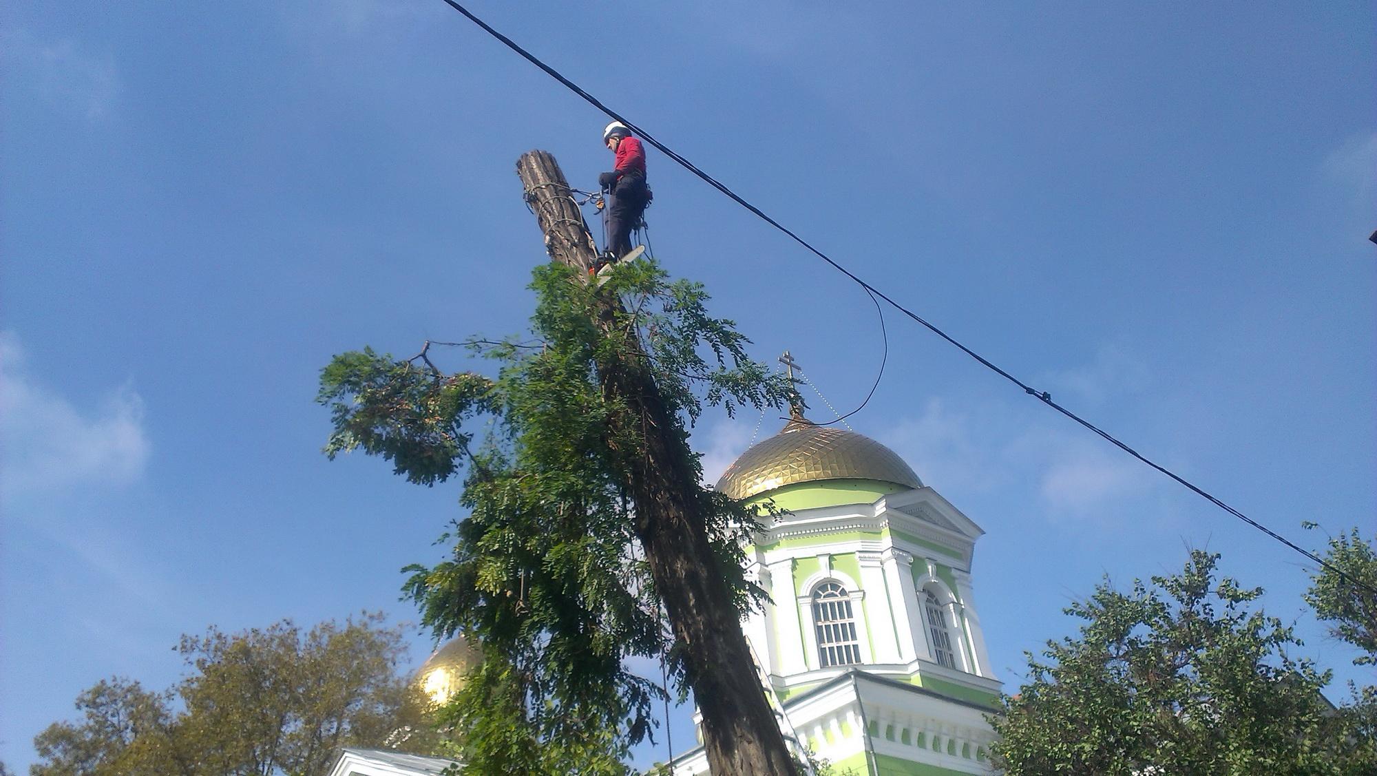 удаление деревьев цена на prom-alpinizm.com.ua
